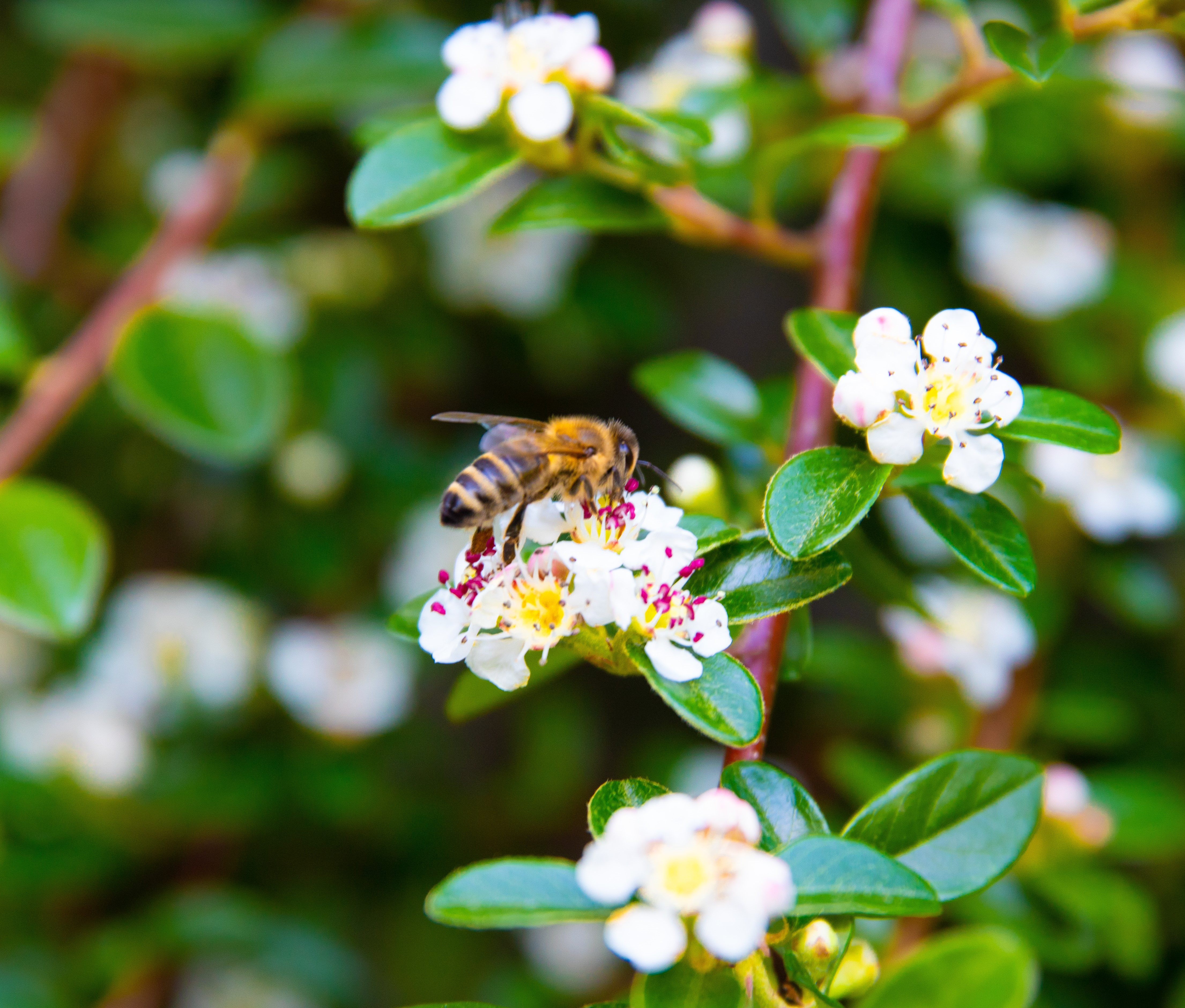 Surval Blog: World Bee Day