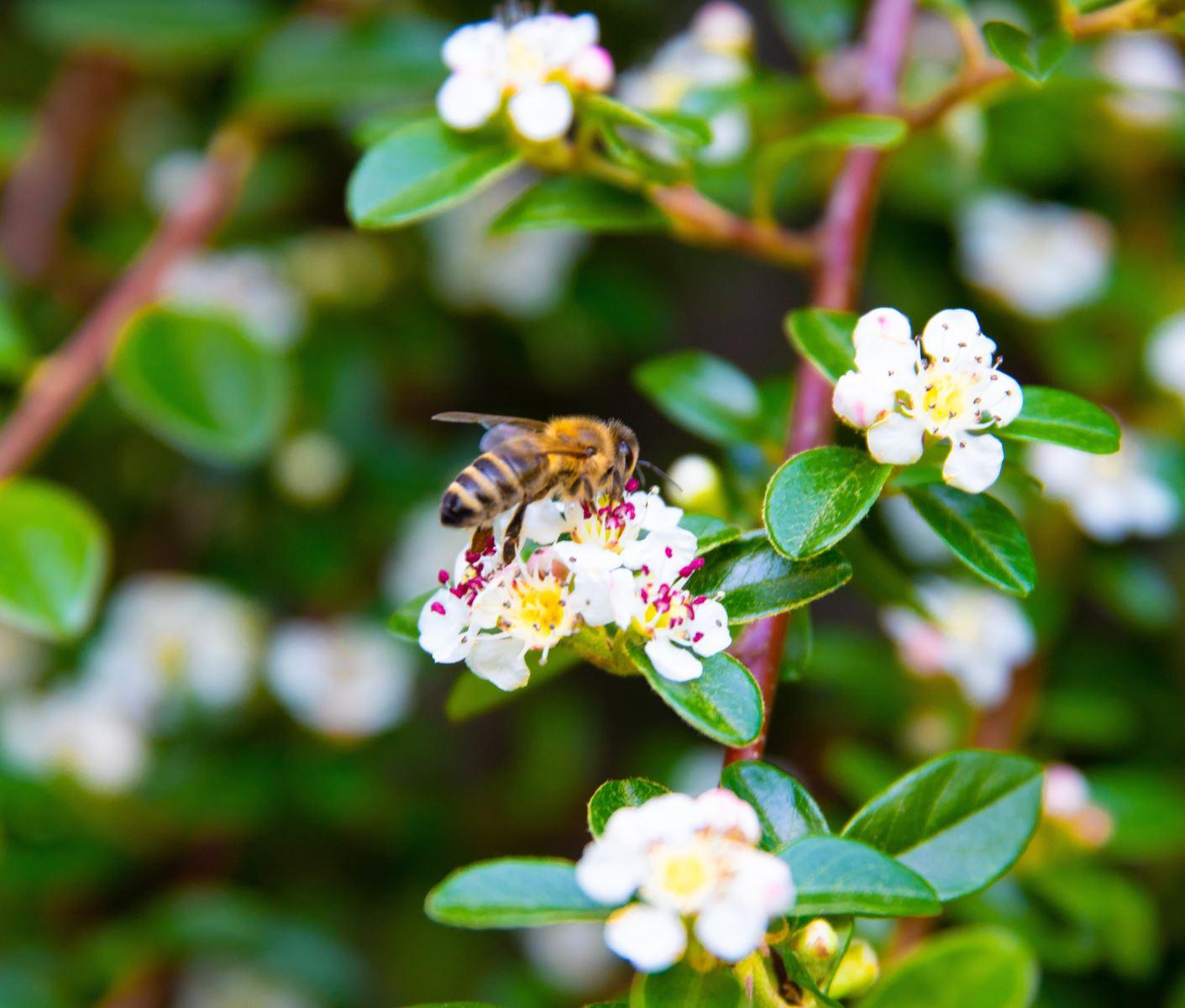 Surval Blog World Bee Day Surval Montreux Images, Photos, Reviews